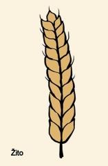 Zemědělské plodiny